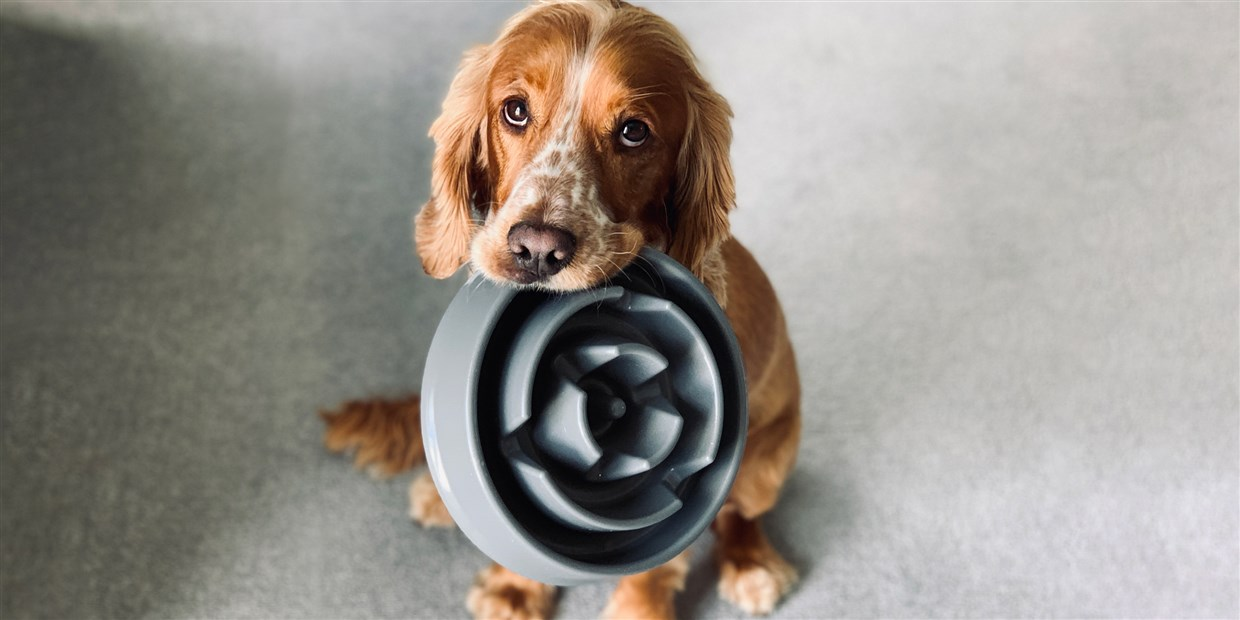 Consider the Nutrients of Pet Supplies for the Health of Your Pet